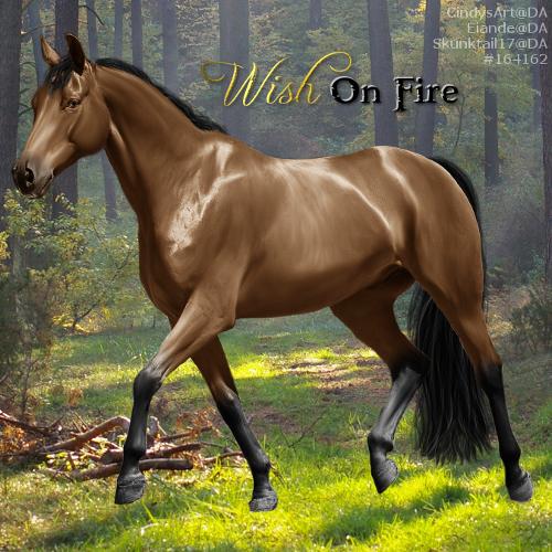 Wish On Fire - EEP ISH Stallion by CloverHoofAcres