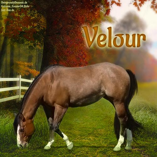Velour by CloverHoofAcres