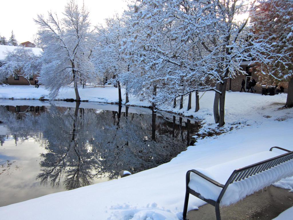 Winter pond ii by wingedlight on deviantart for Winter pond plants