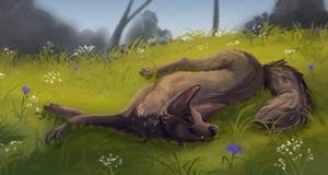 Finished Coyote YCH