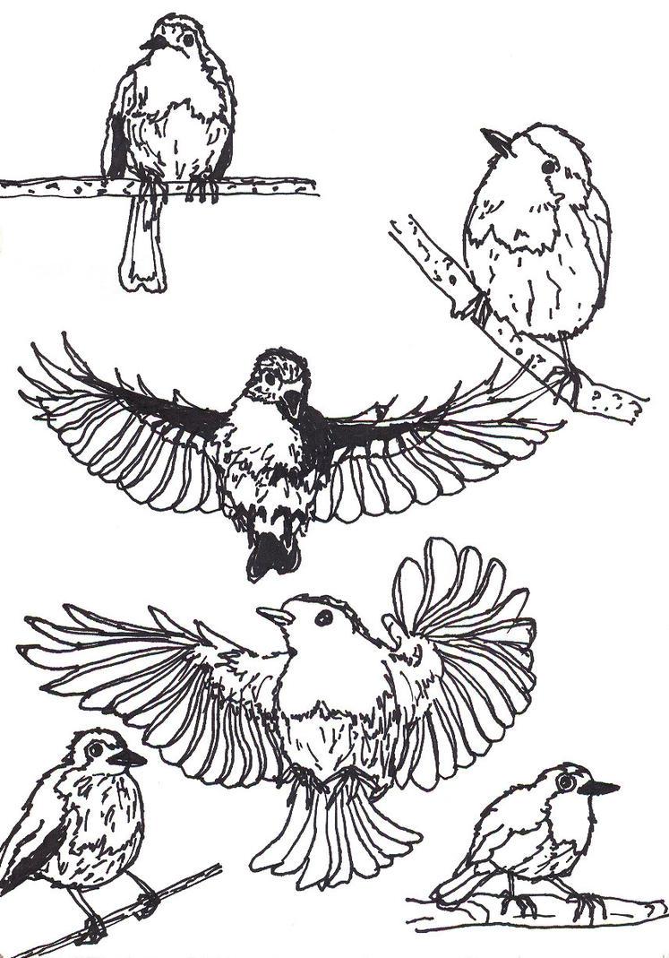 Robin Birds by Molnarka