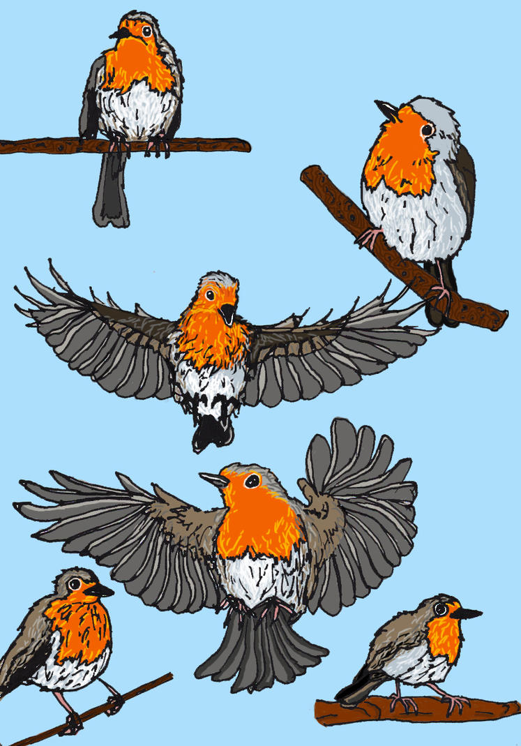 Robin birds in color by Molnarka