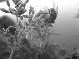 o patrz, kwiatka ucielo. by AppleLady