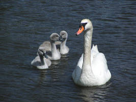 Three little birds by DeinonychusA