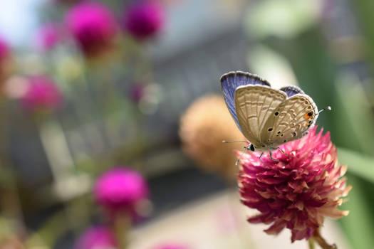The Butterflies Realm