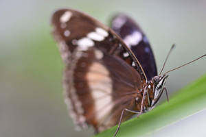 With Parted Wings