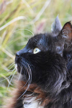 Tuxcat At Peace