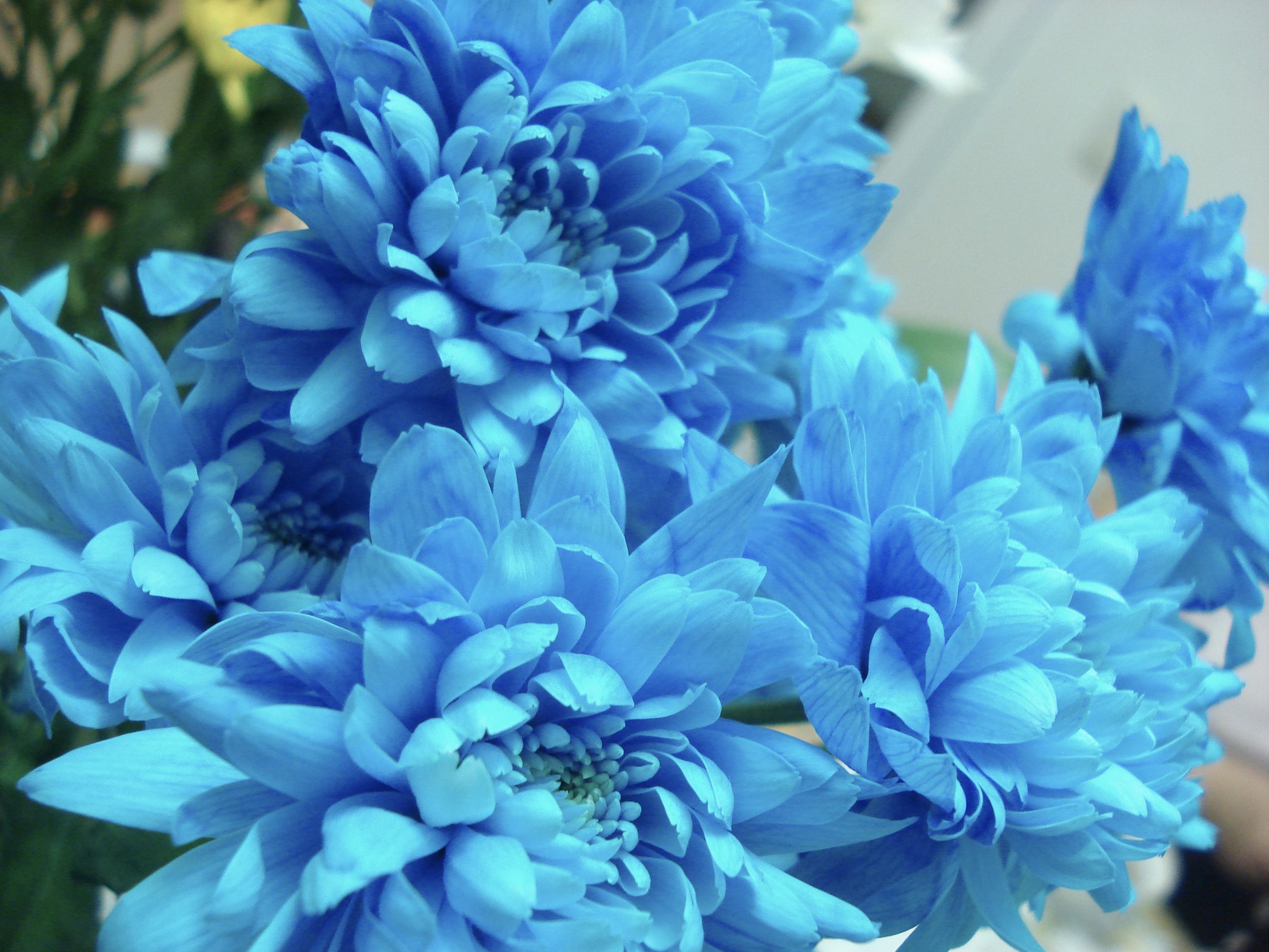 Summer flower blue flowers blue flowers izmirmasajfo