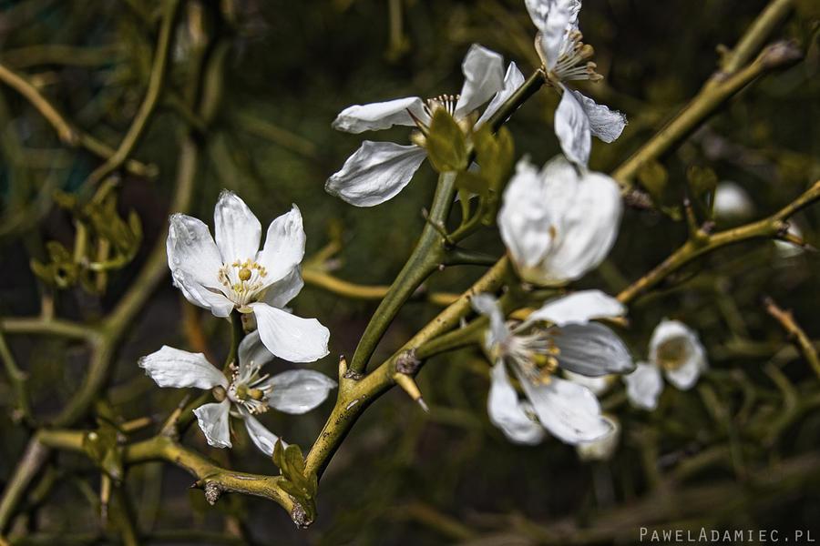 Spring by paweladamiec
