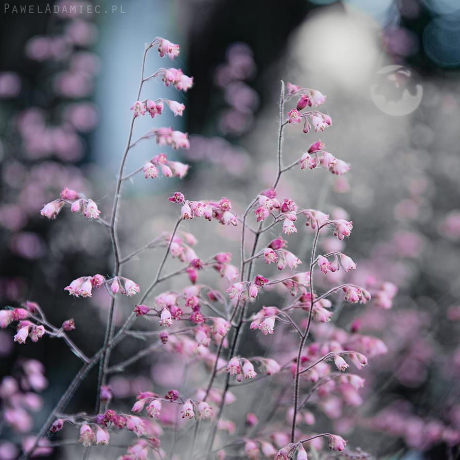 In my garden by paweladamiec