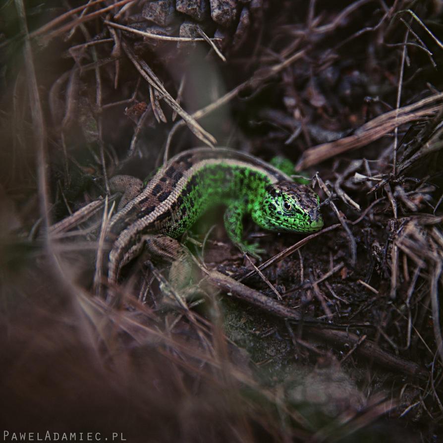 Little dragon by paweladamiec