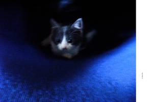 CAT - BLUE by markpiet