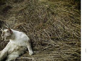 CAT - HMMM... by markpiet