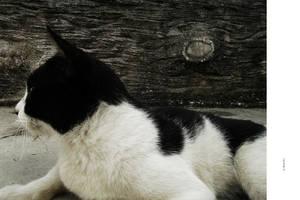 CAT - TAMCHIK by markpiet