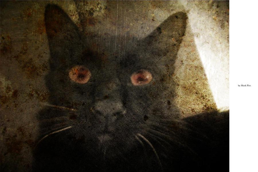 CAT HORROR : CRAZY by markpiet