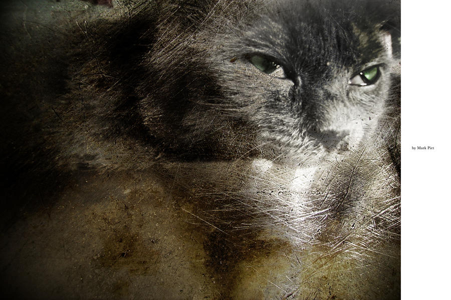 CAT HORROR : SALAMI by markpiet