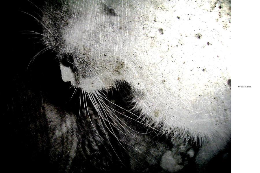 CAT HORROR : BLAIRWITCH by markpiet