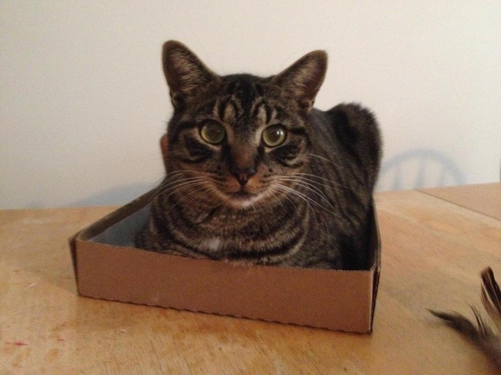 My box by Nikkusangheili33