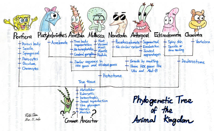 Phylogeny with Spongebob by thehurricanes
