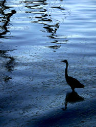 Blue Bird by eliasofthesea