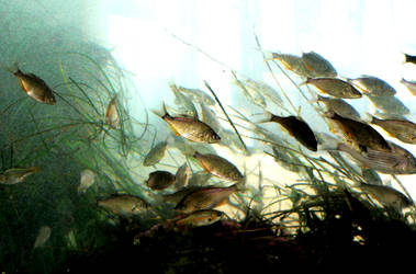 Watercolor Fish by eliasofthesea