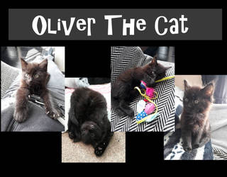 Oliver The Cute Black Cat. by claremanson