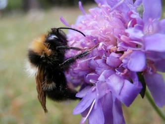 Bumblebee by krabatas