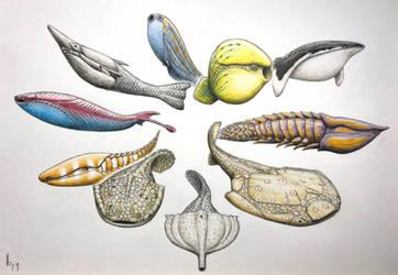 Paleozoic jawless (Agnathan) fishes