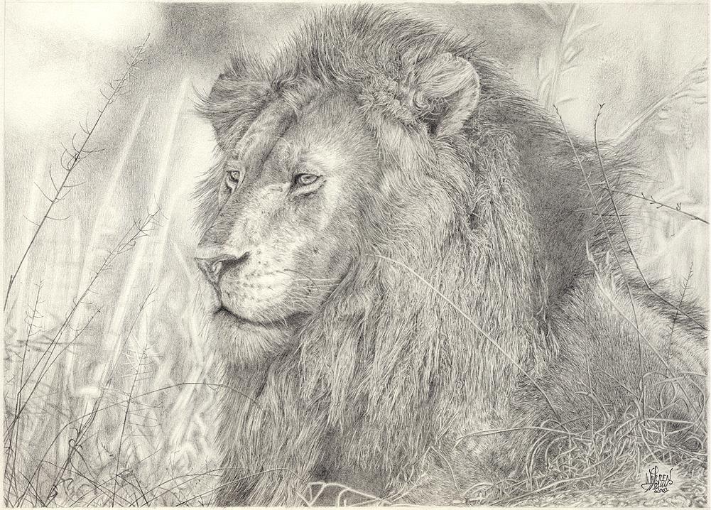 Just A Lion
