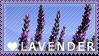 Lavender Stamp by Xinoki