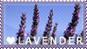 Lavender Stamp by Xinoki