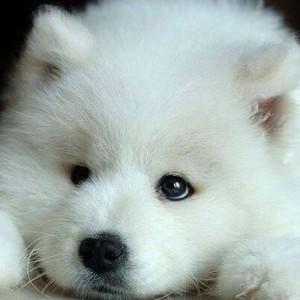 wolfie-stark's Profile Picture