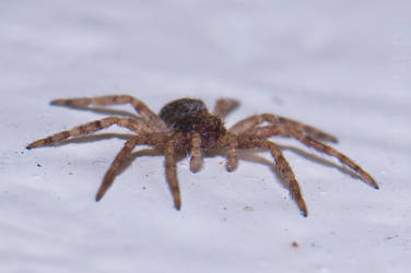 Crouching spider, hidden..  what? by Hermes-Honshappo