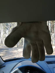 please  much  slowly drive in forest