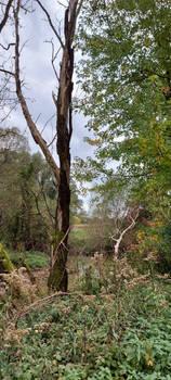 wetland wilderness