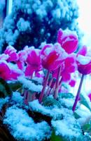 Snow and color by Andorada