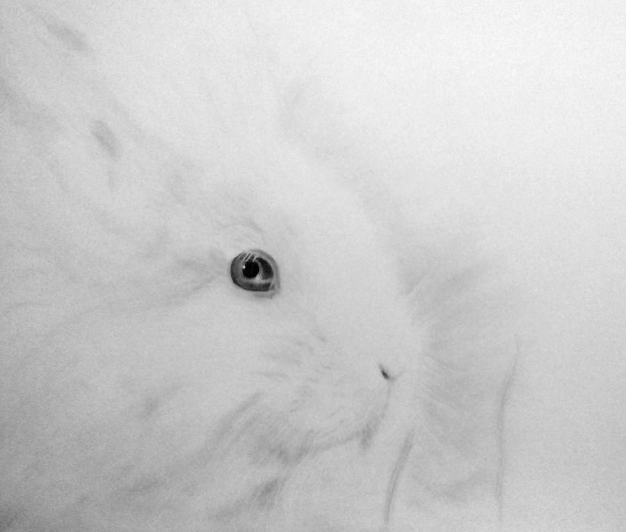 White Rabbit by Andorada