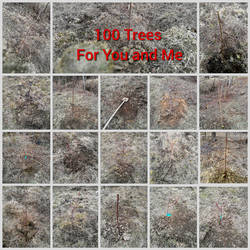 100 Trees for You and Me by Andorada