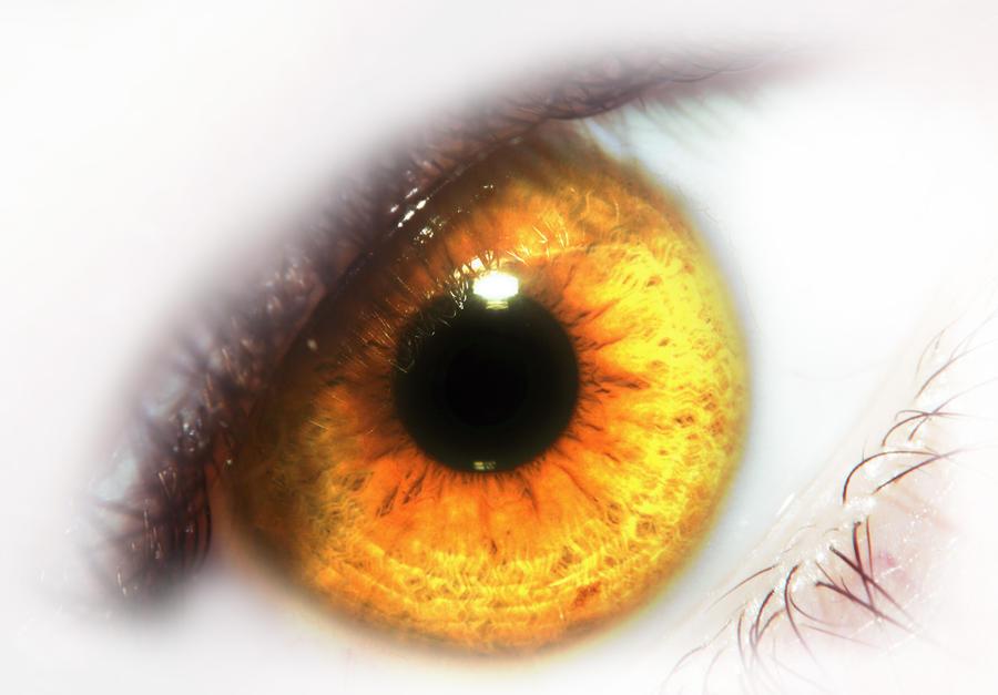 yellow eyes - photo #18