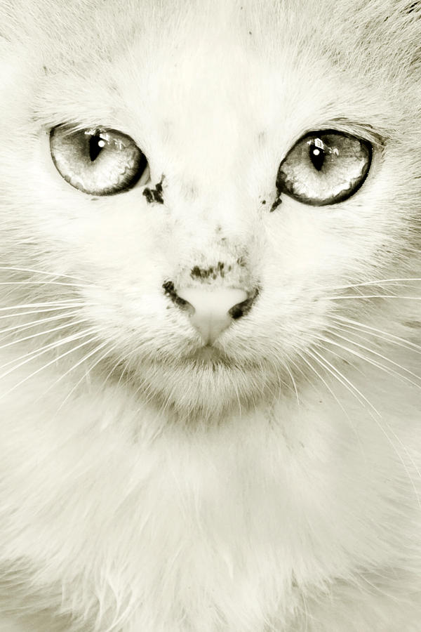 The cat's eye by Kvikken