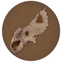 Pachyrhinosaurus Skull by virgiliArt