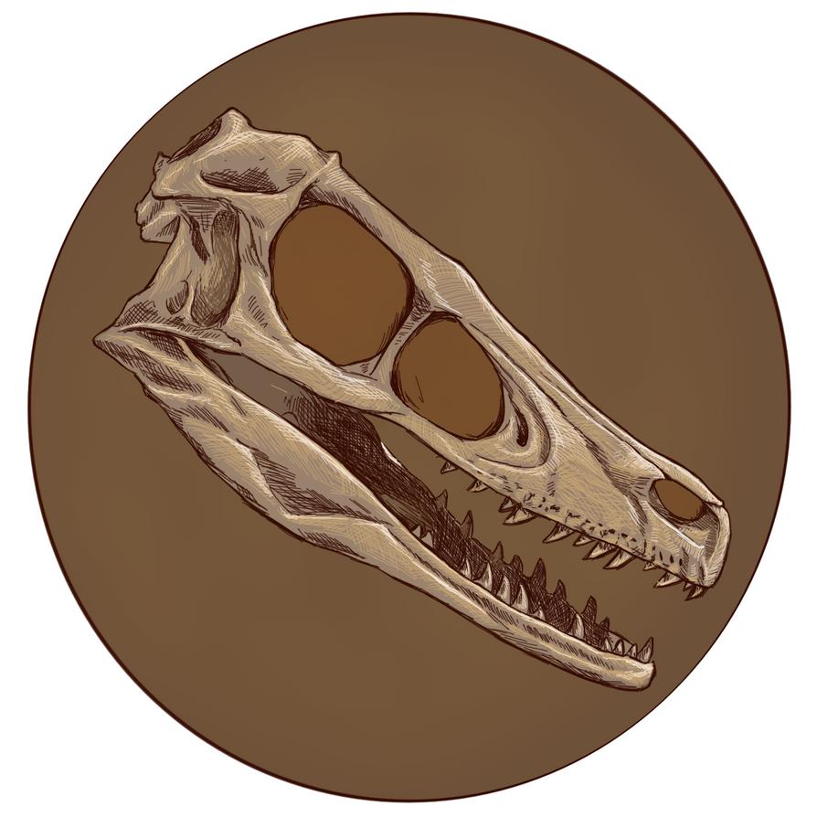 Raptor Skull Drawing Dinosaurs Watermelon Wallpaper Rainbow Find Free HD for Desktop [freshlhys.tk]