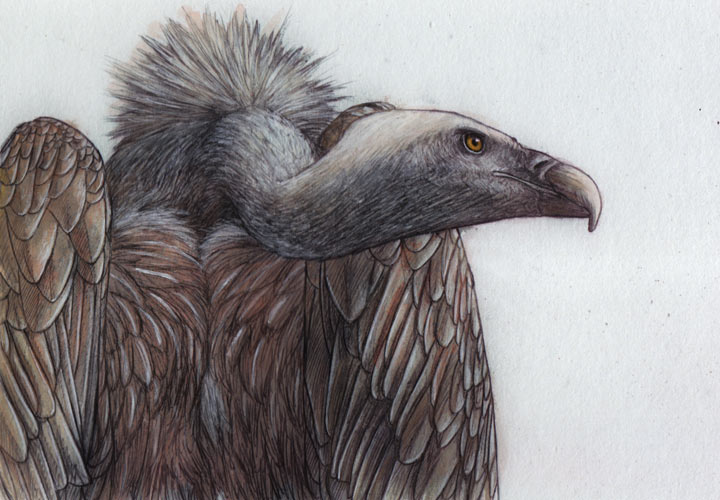 vulture_paint_01 by itsajackal