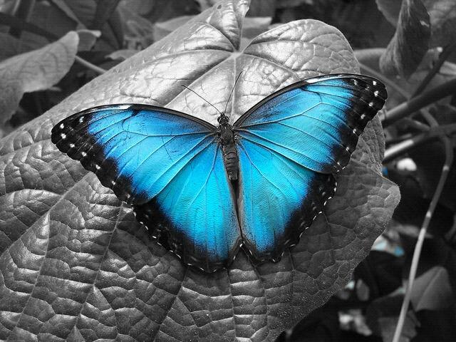 butterfly by lone-arcangel