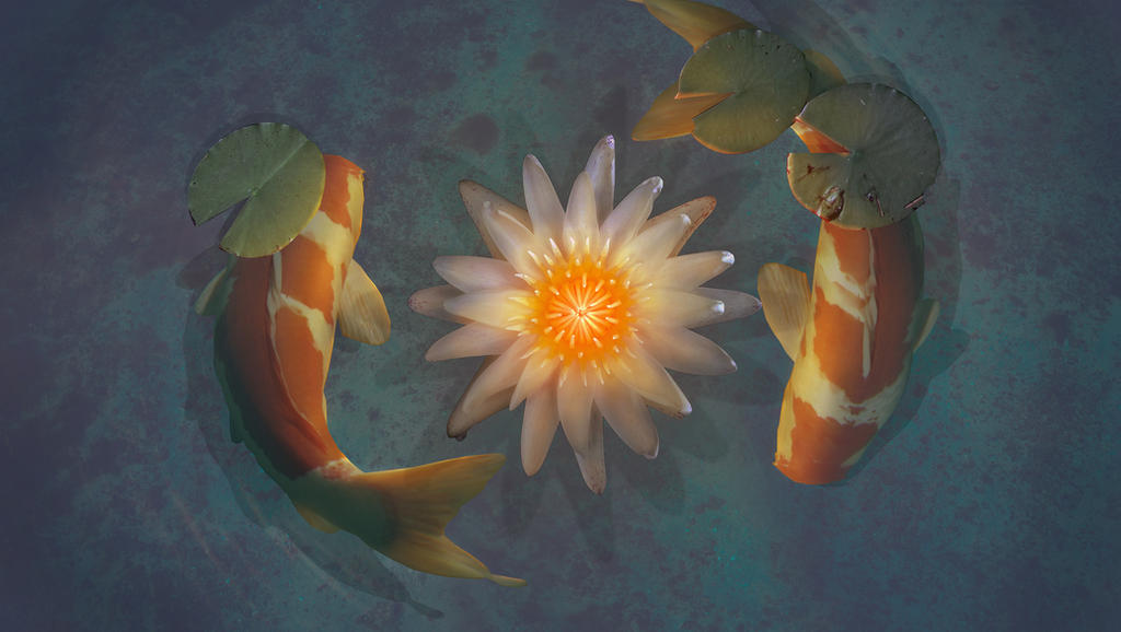 Koi by xlocky on deviantart for How much is a koi fish