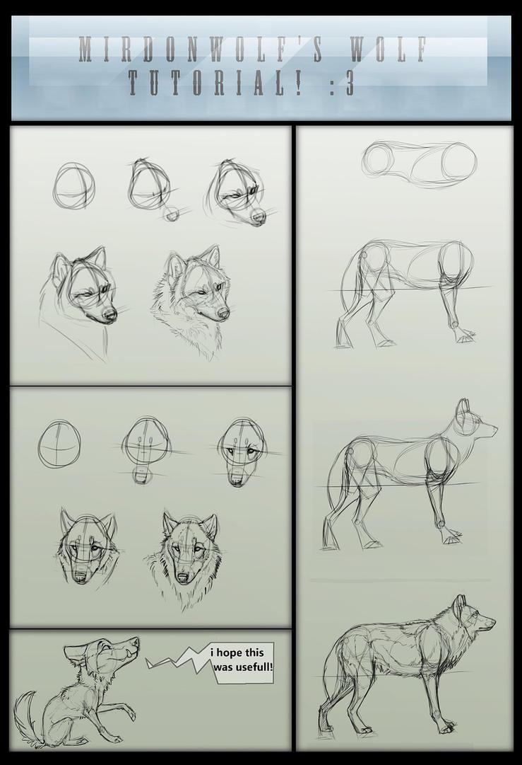 Mirdonwolf's basic wolf tutorial by Foxbat-Sullavin