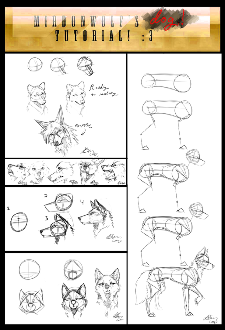 how to draw a wolf front leg