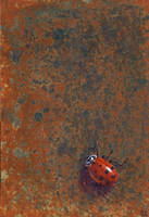 Ladybug on Rust by Kittenpants