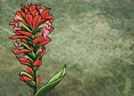 Indian Paintbrush by Kittenpants