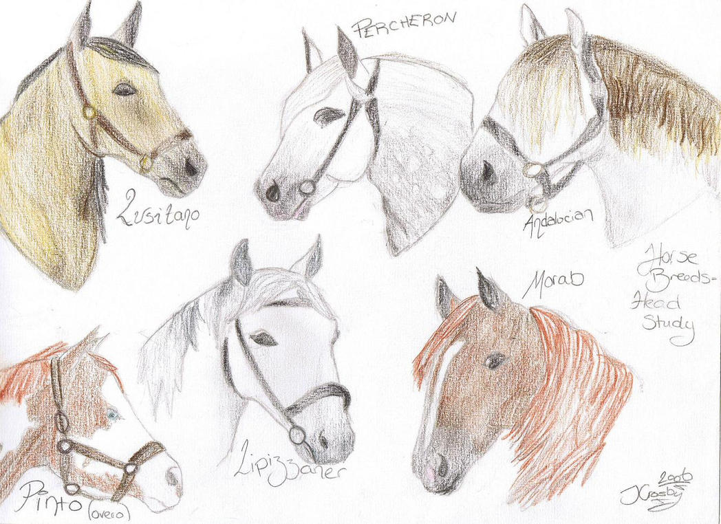 Horse Heads Breed Study By Jayceestar How To Draw A Horse Eating Grass How  To Draw